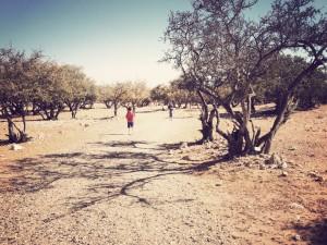 Promenade dans les arganiers… et un peu sur le Port aussi.